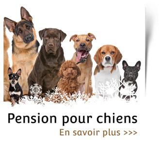 Pension pour chien chez Chien aventures